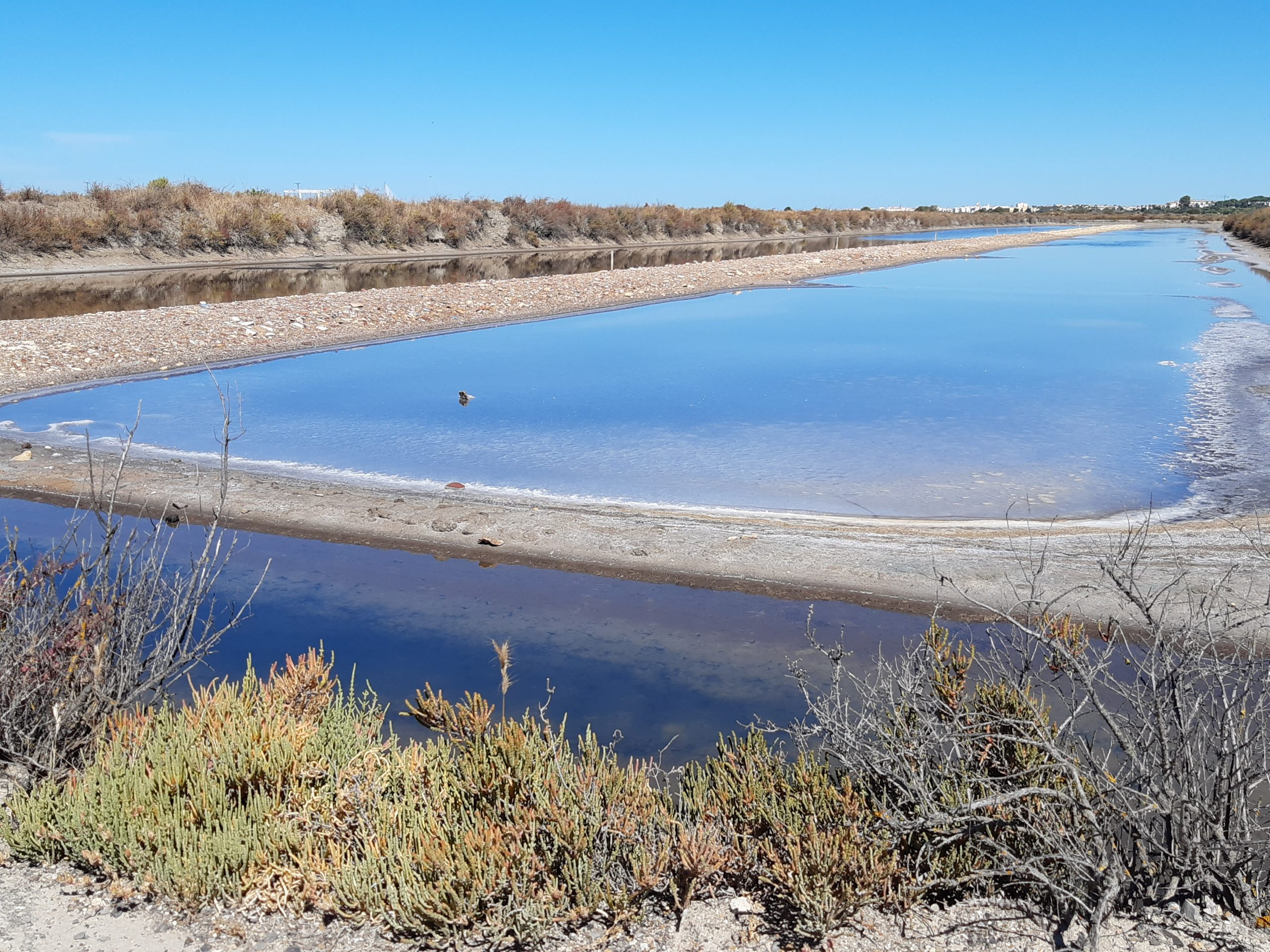 Jornada 'Las oportunidades de la economía azul en humedales: caso concreto de las marismas de la Bahía de Cádiz'