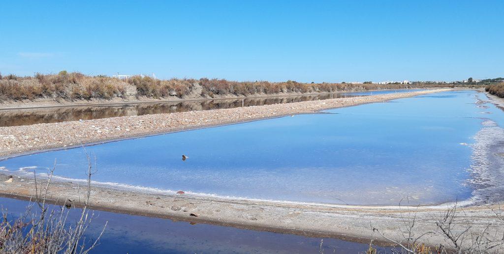 La Salina de la Esperanza de la UCA servirá como modelo para el estudio y recuperación de las marismas de Barbate